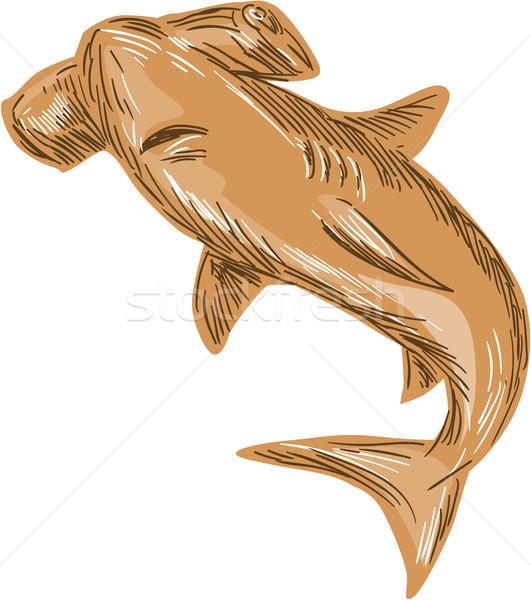 Tubarão desenho esboço estilo ilustração conjunto Foto stock © patrimonio