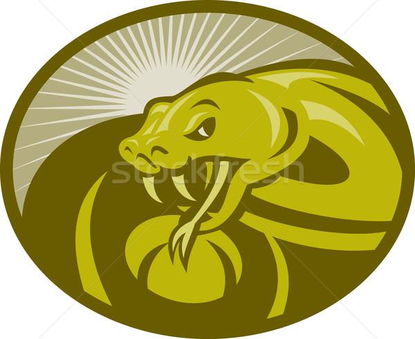Mérges kígyó illusztráció szett bent Stock fotó © patrimonio