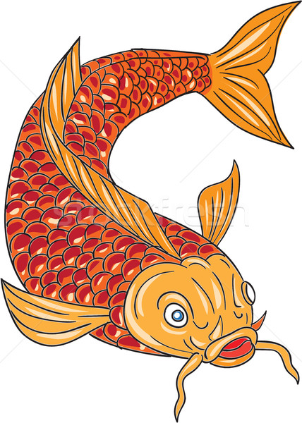 Koi Nishikigoi Carp Fish Swimming Down Drawing Stock photo © patrimonio