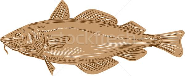 Atlantic Cod Codling Fish Drawing Stock photo © patrimonio