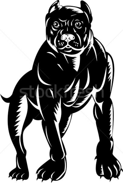 Pitbull kutya illusztráció retro Stock fotó © patrimonio