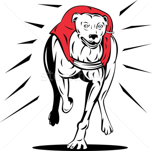 Levriero cane Racing retro illustrazione stile retrò Foto d'archivio © patrimonio