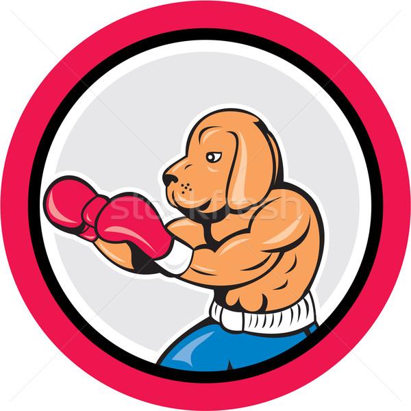 Dog Boxer Boxing Circle Cartoon Stock photo © patrimonio