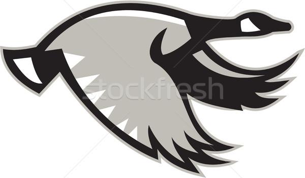 Canada gans vliegen retro illustratie kant Stockfoto © patrimonio