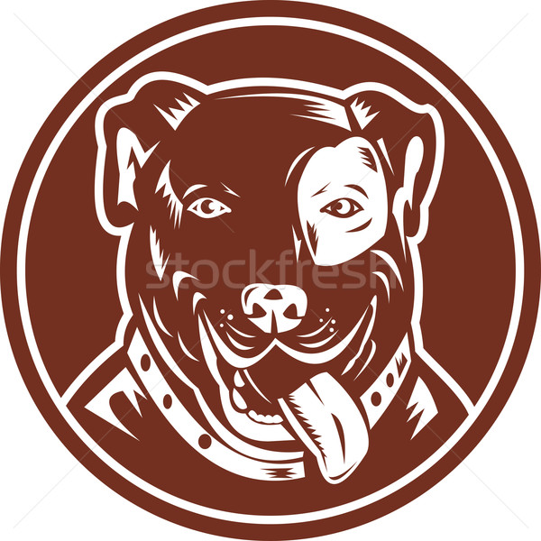American Pit bull Terrier Stock photo © patrimonio