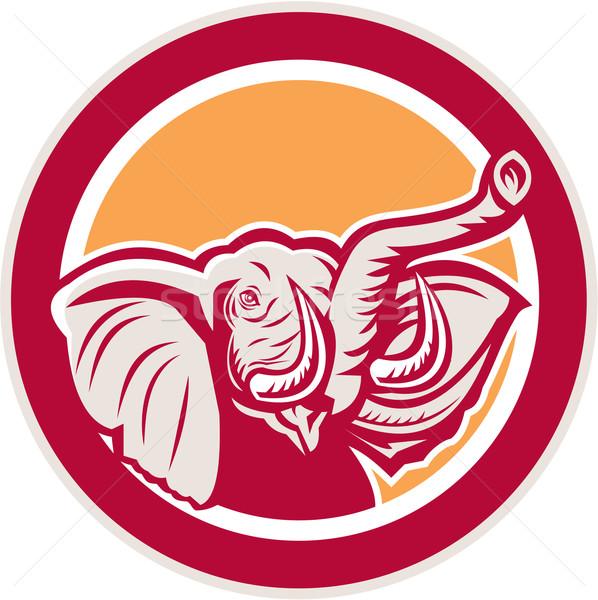 Elefánt fej agyar kör retro illusztráció Stock fotó © patrimonio