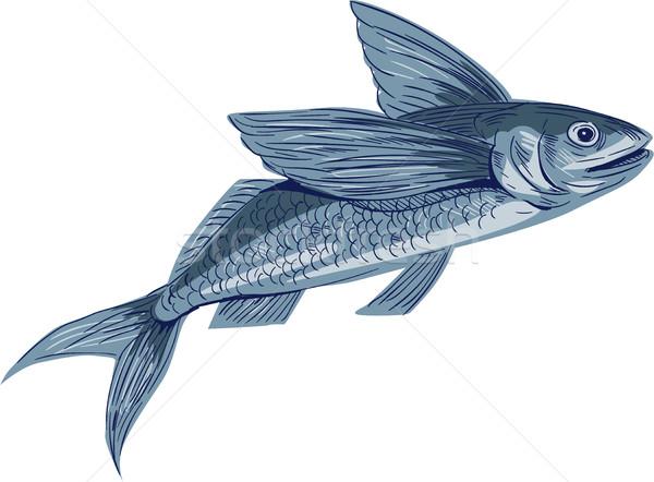 Flying Fish Drawing Stock photo © patrimonio