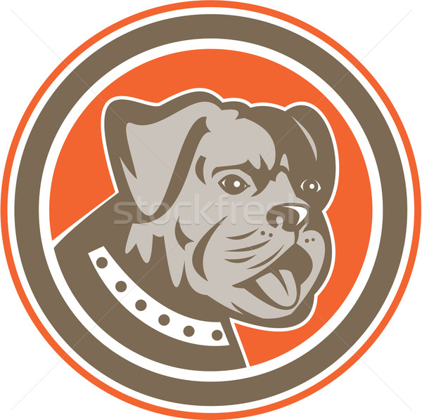 Bulldog Dog Mongrel Head Mascot Circle Stock photo © patrimonio