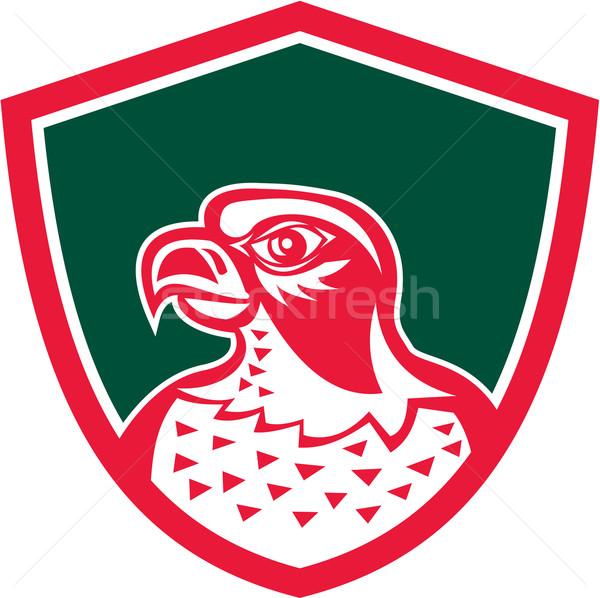 Falcão cabeça lado escudo retro ilustração Foto stock © patrimonio