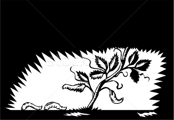 Vine Leaves Morphing Maggots Woodcut Stock photo © patrimonio