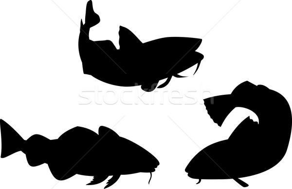 Atlantic Codfish Retro Stock photo © patrimonio
