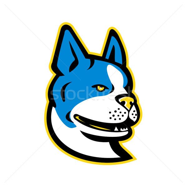 Boston terrier cane mascotte icona illustrazione Foto d'archivio © patrimonio