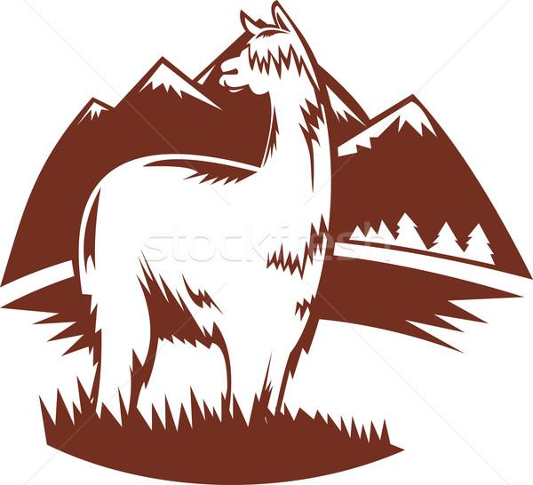 Alpaka dağlar örnek Retro hayvan Stok fotoğraf © patrimonio
