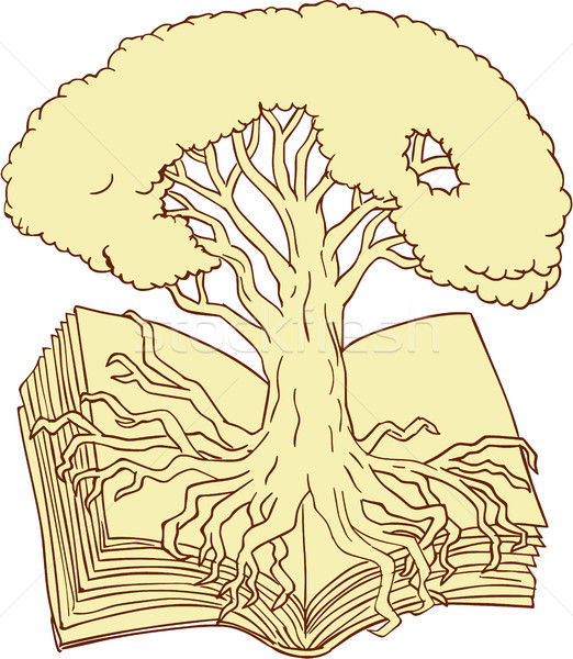 Oak Tree Rooted on Book Drawing Stock photo © patrimonio