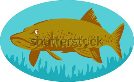 Spotted or speckled Trout swimming Stock photo © patrimonio