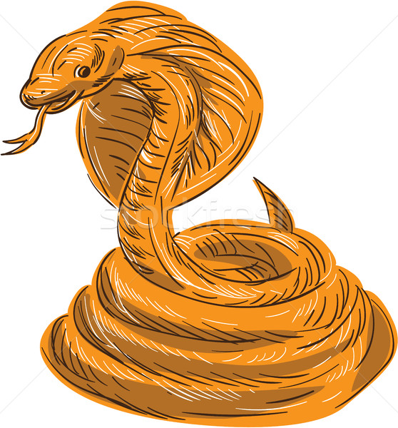Cobra Viper Snake Coiled Drawing Stock photo © patrimonio