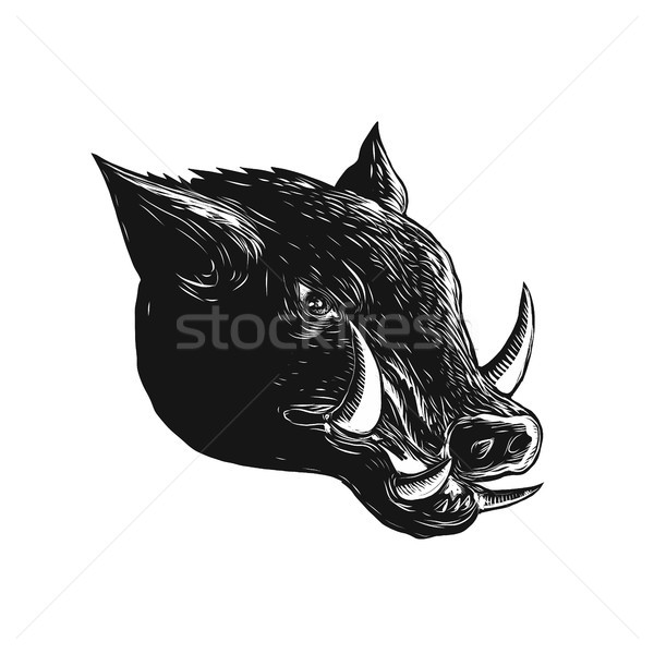 Razorback Wild Boar Scratchboard  Stock photo © patrimonio