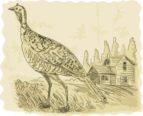 Wild turkey with house in the background Stock photo © patrimonio