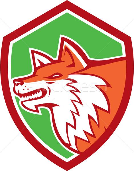 красный Fox голову щит ретро иллюстрация Сток-фото © patrimonio