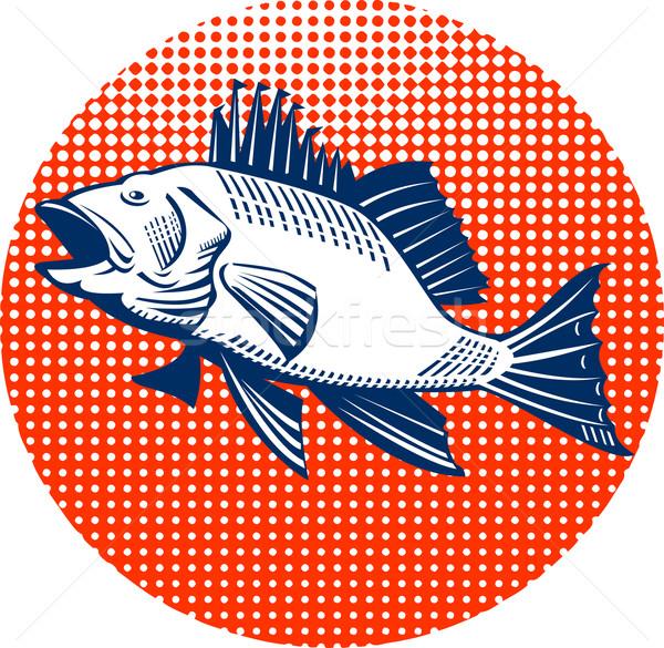 Sea bass fish side view Stock photo © patrimonio