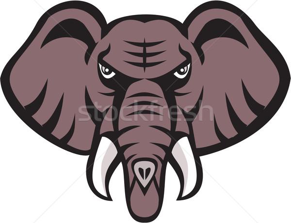 Afrikai elefánt fej mérges agyar retro illusztráció Stock fotó © patrimonio
