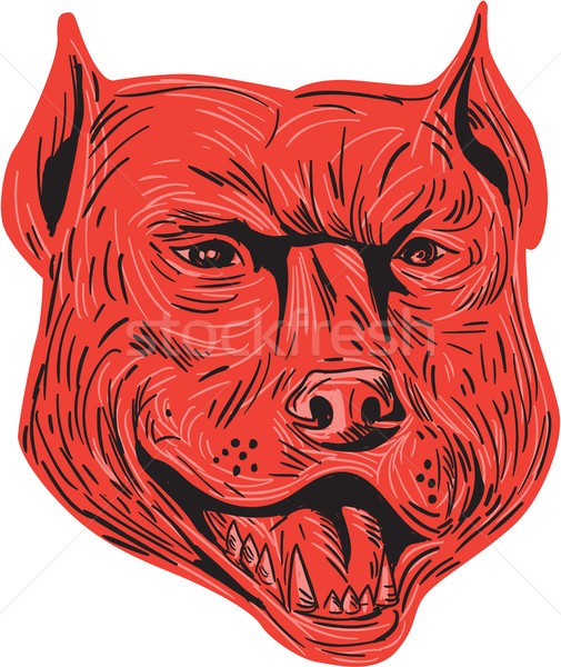 Pitbull Dog Mongrel Head Drawing Stock photo © patrimonio
