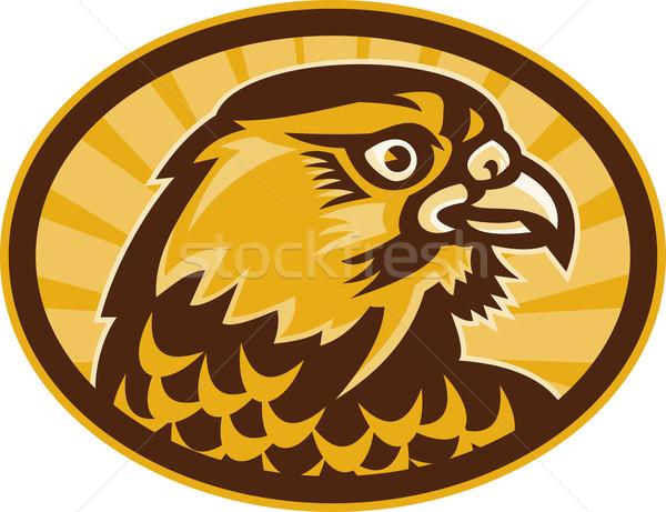 Falcon vista laterale illustrazione guardando lato Foto d'archivio © patrimonio