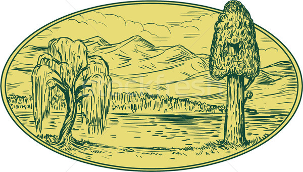 Willow And Sequoia Tree Lake Mountains Oval Drawing Stock photo © patrimonio