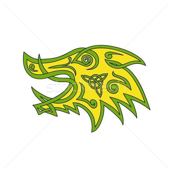 Cinghiale testa celtic nodo stilizzato illustrazione Foto d'archivio © patrimonio