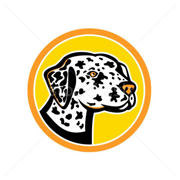 Dálmata cão mascote ícone ilustração Foto stock © patrimonio