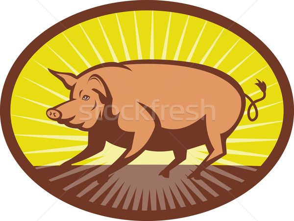 Pig side view with sunburst  Stock photo © patrimonio