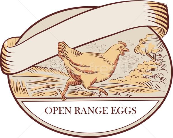 めんどり を実行して オープン 卵 オーバル ストックフォト © patrimonio