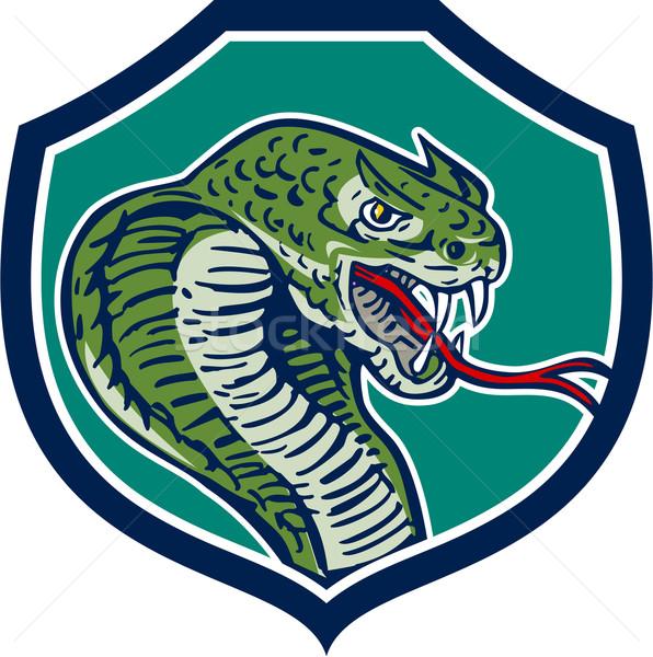 Cobra Viper Snake Shield Retro Stock photo © patrimonio