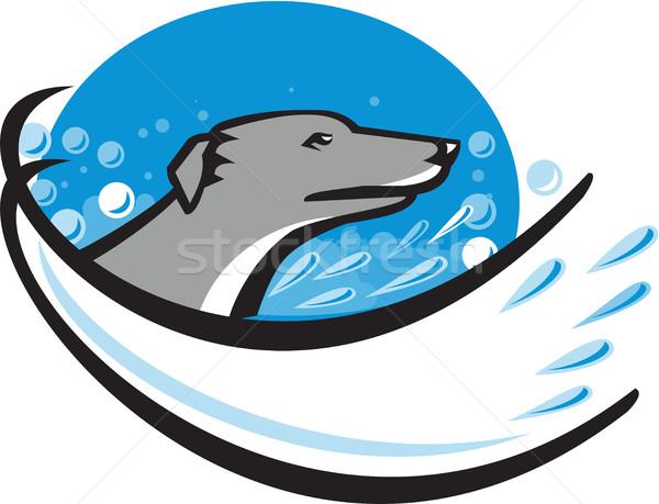 Galgo cão cabeça água bolha oval Foto stock © patrimonio