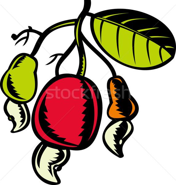 Kesudió dió gyümölcs levél illusztráció retro Stock fotó © patrimonio