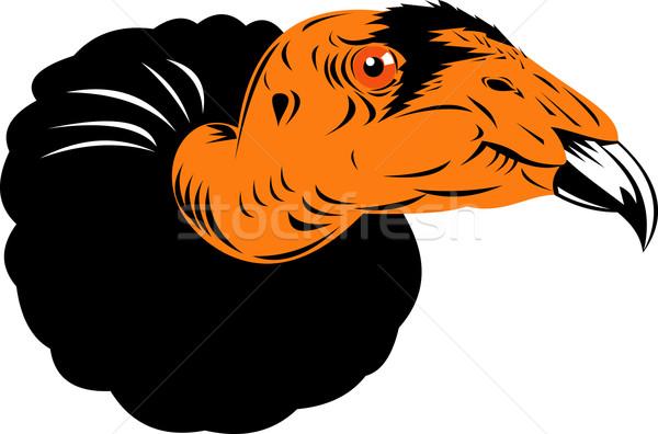 Dögkeselyű ölyv fej illusztráció retró stílus izolált Stock fotó © patrimonio