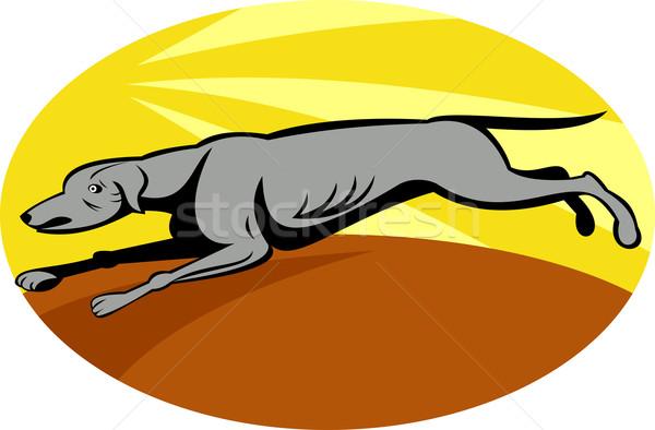 Galgo cão corrida ilustração esportes corrida Foto stock © patrimonio