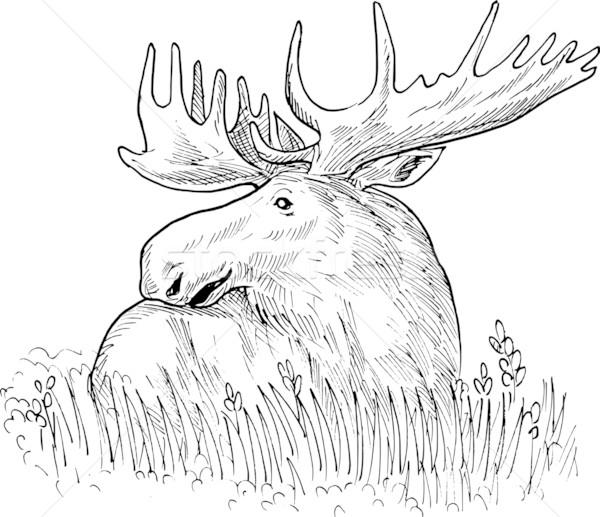 moose or common European elk drawing Stock photo © patrimonio