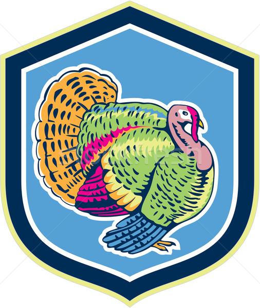 Wild Turkey Side View Shield Retro Stock photo © patrimonio