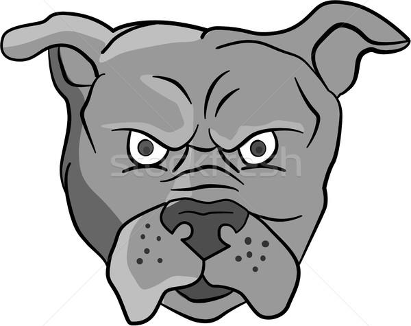 Angry Bulldog Head Cartoon Stock photo © patrimonio