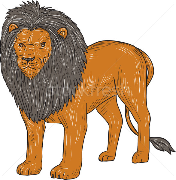Lion Hunting Surveying Prey Drawing Stock photo © patrimonio