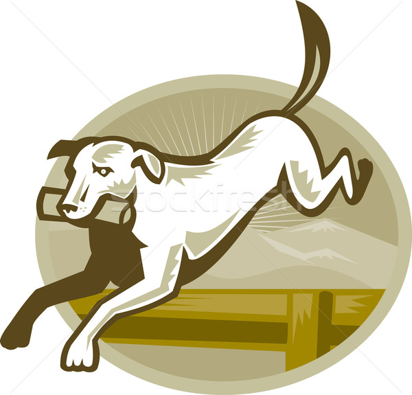Retriever Dog Training Jumping Hurdle Retro Stock photo © patrimonio