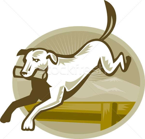 レトリーバー 犬の訓練 ジャンプ レトロな 実例 ストックフォト © patrimonio