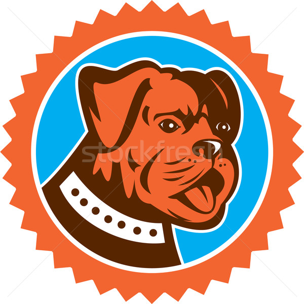 Bulldog Dog Mongrel Head Mascot Rosette Stock photo © patrimonio