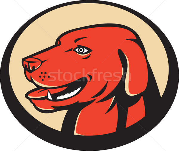 Labrador Golden Retriever Dog Head Stock photo © patrimonio