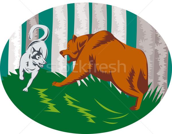 Vad kutya farkas harcol grizzly medve illusztráció Stock fotó © patrimonio