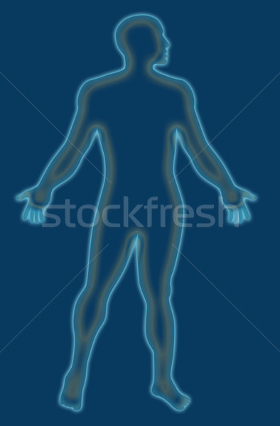 Masculino anatomia humana azul ilustração Foto stock © patrimonio