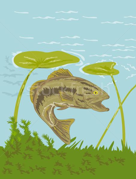 低音 魚 水中 実例 スイミング ストックフォト © patrimonio