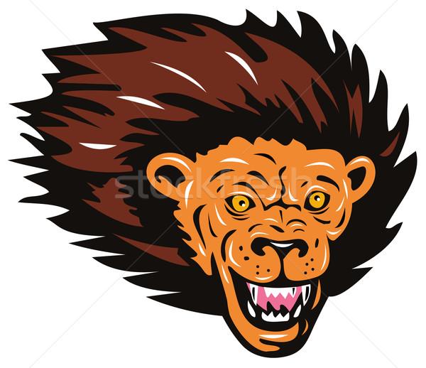 Lion Big Cat Head Stock photo © patrimonio