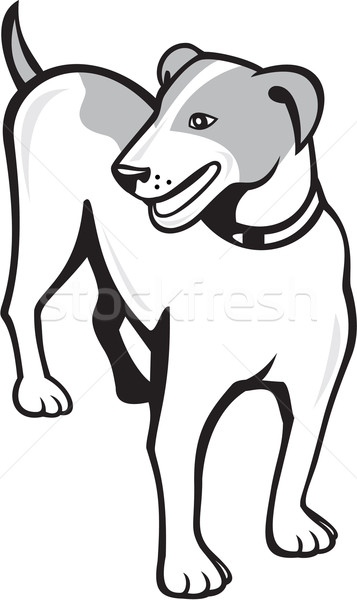 Джек-Рассел терьер Постоянный Cartoon иллюстрация собака глядя Сток-фото © patrimonio